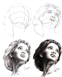 head proportion