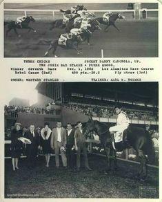 Running Horses, Race Horses, Horse Racing, Neon, Pictures, Calendar, Photos, Neon Colors, Grimm
