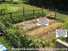 Modern Sustainability...old-fashioned methods: growing vining berries around the perimiter of the garden