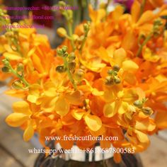 Whatsapp+8618687800583 Freshcutfloral Is Alibaba Best Wholesale Orchid Flower Information And Beautiful Rose Flower Bouquets For Real Flower Bouquets Weddings