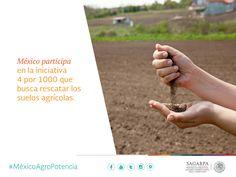 México participa en la iniciativa 4 por 1000 que busca rescatar los suelos agrícolas. SAGARPA SAGARPAMX #MéxicoAgroPotencia