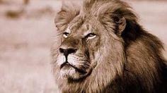 ¿Quién es el infame cazador español que ha decapitado al viejo león 'Cecil'? :: Sociedad :: PD América