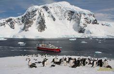 #Antarctica in Photos: Icebergs, Glaciers and Penguins