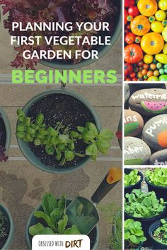 Container Gardening For Beginners Vegetable Gardening For Beginners: How To Plan Your First Patch Vegetable Garden Planner, Vegetable Garden For Beginners, Backyard Vegetable Gardens, Gardening For Beginners, Gardening Tips, Garden Landscaping, Gardening Quotes, Gardening Services, Flower Gardening