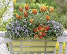Beautiful spring window box
