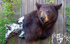 black bear shoulder pedestal mount - Google Search