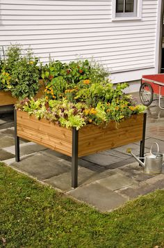 4' x 4' Elevated Cedar Planter Box   http://www.gardeners.com/buy/elevated-cedar-planter-box-4x4/8588355.html