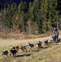 Pulling For Urban Mushing – Is It The Right Activity For Your Dog? - PetGuide