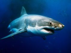 Video: Shark Diving in the Desert