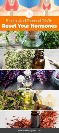 Herbs have many amazing healing properties and one of their most fascinating qualities is their potential ability to affect your hormones in a positive way. Five of the herbs that are of special interest to hormonal health and hormone balancing are: thyme, holy basil, clary sage, sandalwood, and myrtle. What do we mean when we...