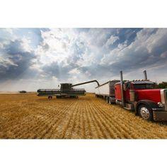 Paplow Harvesting Company custom combines a wheat field near Ray North Dakota United States of America Canvas Art - Richard Hamilton Smith Design Pics (19 x 12)