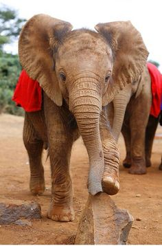 I WILL get to play with elephants one day.