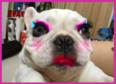 Omg. Such adorable dog abuse. Lol! How'd they ever get this baby to sit still while they did this to it? LMAO