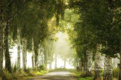 Photograph Bench & Birches by Lars van de Goor