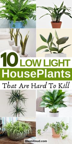 Light Houseplants You Won't Be Able To Kill 10 Low light houseplants that are low maintenance and hard to kill. These low light indoor plants include air purifying plants and are perfect for Low light houseplants that are low maintenance and h Indoor Plants Low Light, Low Light Houseplants, Low Light Succulents, Indoor Plants Clean Air, Air Cleaning Plants, Best Indoor Plants, Kitchen Plants, Flower Pot Design, Decoration Plante