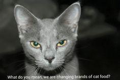 Natural Families Choose Natural Pet Food @onlynaturalpet #PawNatural #sponsored Only Natural Pet Feline PowerFood