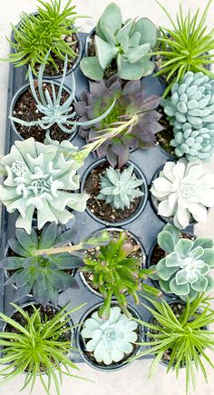 Succulents have taken over the world. Not content to only be in beautifully styled pinterest and instagram photos, they have infiltrated the galaxy.