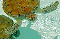 ✓ Bucket List #17:  Swim with turtles in Akumal