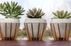 La Morena Plant Pots - laser cut wooden holders