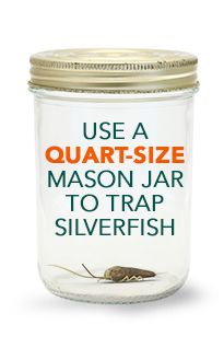 Silverfish mostly live outdoors, but could be found in the damp areas of your home. Learn more about how to get rid of silverfish naturally. Silverfish Control, Get Rid Of Silverfish, Diy Cleaning Products, Cleaning Hacks, Getting Rid Of Moths, Quart Size Mason Jars, Backyard Patio, Habitats, Life Hacks