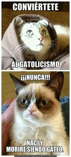 Conviértete al gatolicismo.