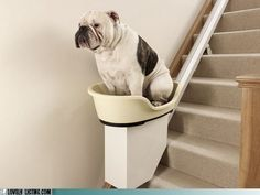 for Arthritic/Old Dogs.  Seat drops down to the floor level so dog can get in.