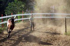 Costa Rica - Riding Horses in Monteverde