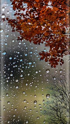 Autumn Leaves and Raindrops Wallpaper