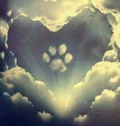 All dogs go to heaven. Grateful for the time He lends them to us. ❤️ All dogs go to heaven.