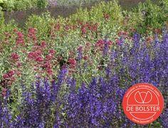 Biologisch meerjarig bloemenmengsel is een gevarieerd mengsel. Sommige planten bloeien al in het eerste jaar, anderen in het tweede jaar. Online verkrijgbaar bij De Bolster