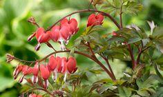 Bilde av SMÅHJERTE 'PINK ' Planters, Garden, Pink, Photo Illustration, Lawn And Garden, Hot Pink, Gardens, Plant, Window Boxes