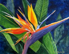 """Bird of Paradise"" Flower Painting Art Print of Original Watercolor by Barbara Rosenzweig 11x14 matted to 16x20, fits standard frame $62"