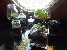 DIY Terrariums, terrariums, how to make a terrarium, diy, green gift, green diy,