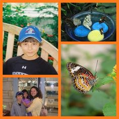Visit a Butterfly House - great experience for the kids! Plus 40+ more fun butterfly activities & crafts