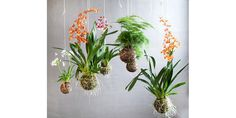 Name: string garden kokedama String Garden, Garden Art, Garden Plants, Indoor Plants, House Plants, Garden Design, Garden Ideas, Shade Garden, Air Plants
