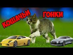 Симулятор кошачьих гонок - Team Drift Cats