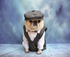 Miss Bailey Puggins dressed as Arthur Shelby, our favorite character from the British TV series Peaky Blinders.  #PeakyBlinders #ArthurShelby #Peaky #Blinders #pug #dog #costume #Halloween