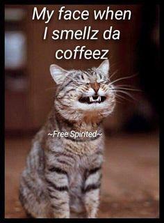 Happy Coffee, Good Morning Coffee, Coffee Is Life, I Love Coffee, Coffee Coffee, Coffee Break, Coffee Quotes, Coffee Humor, Funny Coffee