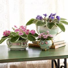 African violets like warm conditions and filtered sunlight, so set the pot in an east- or west-facing window about 12 inches from the glass.