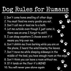 I disagree with 2, 5, and 7. Dogs cannot sleep in the bed and they belong nowhere in the kitchen