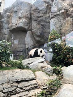 Hong Kong Travel Itinerary: Part 3 Panda Panda, Ocean Park, Hong Kong, Travel, Viajes, Destinations, Traveling, Trips