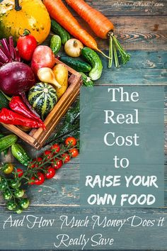 What's the Real Cost of Raising A Garden Part 1 | Melissa K. Norris