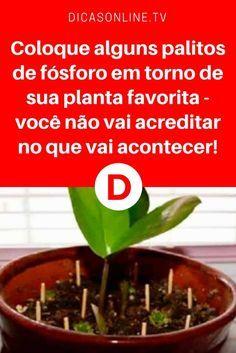 Combater pragas | Coloque alguns palitos de fósforo em torno de sua planta favorita - você não vai acreditar no que vai acontecer! | Mais uma dica incrível... Leia e saiba ↓ ↓ ↓