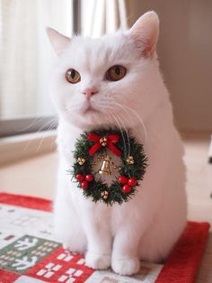 I wish you a Merry Christmas. Urara-chan cat holiday participation. More photos on these links: https://twitter.com/urabanashi813/status/544627195843338240     https://twitter.com/urabanashi813