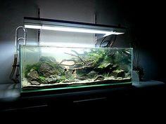 Yamadori par Ludo #aquascaping #aquarium