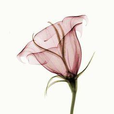 Imagem de flower