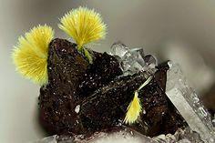 Tungstibite, b2O3•WO3, Clara Mine, Wolfach, Black Forest, Germany. Tungstibite on Tetraedrite/Tennantite. Fov 1,95 mm. Collection:H. Hettrich. Copyright: © loparit 2014