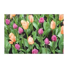 Peach and Purple Tulips Wrapped Canvas Print (as shown, $163.00).