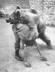 april-1951-an-iranian-performace-of-a-man-wrestling-a-bear-in-public-picture-id50865365 (785×1024)