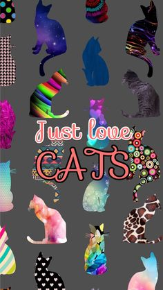 Cats❤️